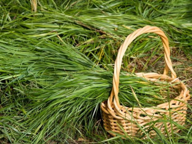 2930 Місячний календар садівництва з 16 - 28 лютий 2019