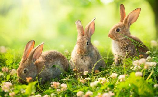 3154 Кролик