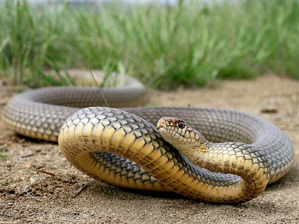 3158 Змія
