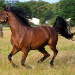 3160 Кінь