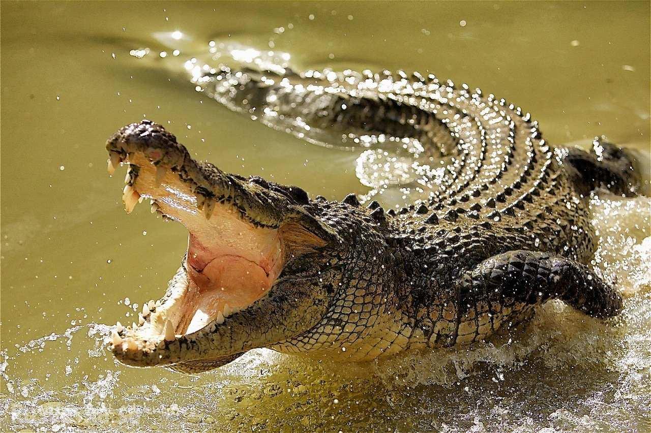 3661 Талісман тварина Крокодил