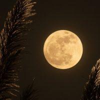 3755 Гороскоп на 7 июля 2020 года. Луна сегодня 7.07.2020